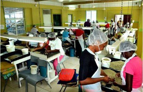 Mavis Bank Coffee Factory Success Story